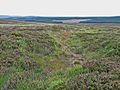 Fylingdales Moor.jpg