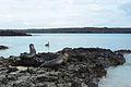 Galápagos Inseln, Ecuador (13895056246).jpg