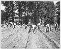 Garden Crops, Production and Preservation 008 boys planting potatoes.jpg