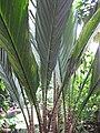 Gardenology-IMG 8006 hunt10aug.jpg