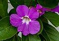 Gardens by the Marina Bay-13 (8326961591).jpg