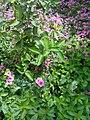 Gardens in Baghdad 52.jpg