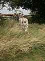 Gatepost, Saltway Barn - geograph.org.uk - 231391.jpg