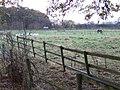 Geese in the paddock - geograph.org.uk - 620868.jpg