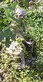 Giardino corsini, statua bambino con tartaruga 02.JPG