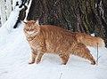 Gillie in the Snow (4291495408).jpg
