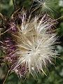 Golan 'Dandelion' 0998 (507922336).jpg
