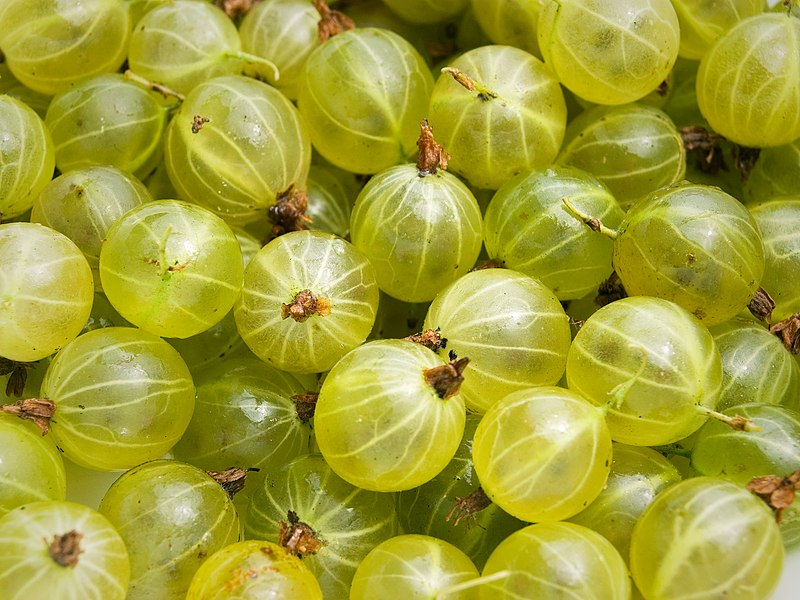 File:Gooseberries.jpg