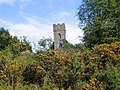 Gorse bushes near the church in Lealholm - geograph.org.uk - 1598546.jpg