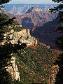 Grand Canyon Widforss trail. 03.jpg