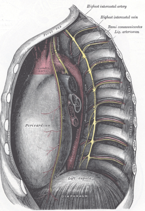 Ligamentum arteriosum - The middle and posterior mediastina. Left side. (Lig. arteriosum labeled at upper right.)