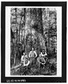 Great Smoky Mountains National Park Roads and Bridges, Gatlinburg, Sevier County, TN HAER TENN,78-GAT.V,6-25.tif