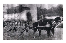 Historical photograph showing a double team of Greater Swiss Mountain Dogs pulling a merchant's wagon.