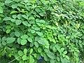 Green - panoramio (49).jpg