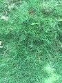 Green Grass 005.jpg