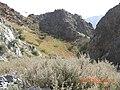 Greenery among Dry mountains 03.jpg