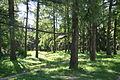 Grishko Botanical Garden 2014 101.jpg