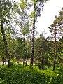 Gryshko botanical garden (May 2018) 19.jpg