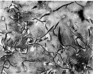 Gray iron - Micrograph of grey cast iron.