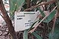 HK 上環 Sheung Wan 差館上街 Upper Station Street 水巷 Water Lane Rest Garden plant 棕竹 Rhapis Excelsa 棕櫚科 Arecaceae November 2017 IX1 sign.jpg