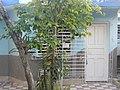 HOG Annona muricata 0.jpg