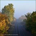 Hanging Over the Train Tracks (15525393936).jpg