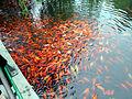 Hangzhou 2009 1572.jpg