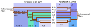 "Haplogroup A (Y-DNA) - The revised y-chromosome family tree by Cruciani et al. 2011 compared with the family tree from Karafet et al. 2008. (The ""A1a-T"" shown here is now known as A1 and ""A2-T"" is now known as A1b.)"