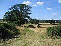 Harvest time - geograph.org.uk - 214071.jpg