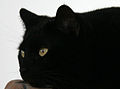 Have a nice Friday 13th! from a Black Cat.jpg