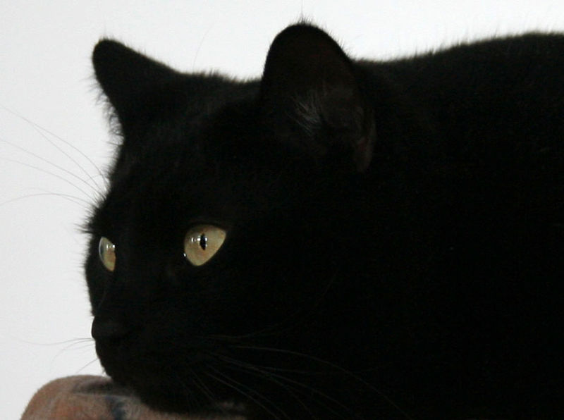 File:Have a nice Friday 13th! from a Black Cat.jpg