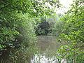 Haverforths Wiesen (ST-031) Teich 04.jpg
