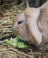 Hector Chows Down (6823002932).jpg