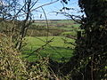 Hedge View - geograph.org.uk - 152033.jpg