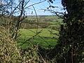 Hedge View - geograph.org.uk - 152033.jpg
