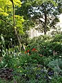 Herbaceous border, Queen's Gate Gardens - geograph.org.uk - 464568.jpg