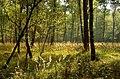 Herbst in der Wahner Heide 1.jpg
