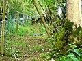Hidden path - geograph.org.uk - 1362913.jpg