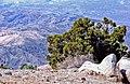 High and Low Desert, Joshua Tree NP 4-13 (19842227320).jpg
