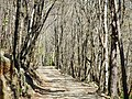 Hiking trail - panoramio.jpg