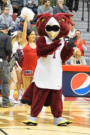 Temple Owls - Hooter, the Temple mascot