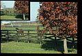 Horse Paddock (Missouri State Archives) (8203211081).jpg