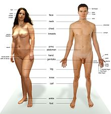 Photograph of an adult female human, with an adult male for comparison. Note that the body hair of both models is removed.