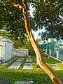 Hurricane Irma - Miami - Miami City Cemetery 06.jpg
