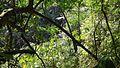 Hutan Hujan Tropis.jpg