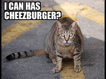 I can has cheezburger.jpg