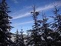 Il ritorno dell'inverno - panoramio.jpg