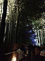 Illuminated Sagano bamboo forest 7.jpg