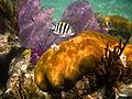Incredible Corals (6021865117).jpg