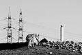 Industrial Zebra.jpg